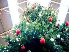 Xmas. Panorama Christmas tree. Stock Footage