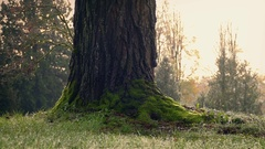 Moving Past Tree In Wet Morning Grass Stock Footage