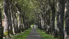 A sidewalk lined on both sides with trees in the summer. Stock Footage