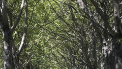Tilting down from overhead branches to a sidewalk in the summer. Stock Footage