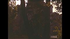 Vintage 16mm film, 1955 Germany couple in tree, dark woods Stock Footage