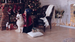 Young girl with dog Samoyed near the Christmas tree Stock Footage