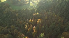 Black forest at autumn Stock Footage