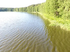 Flight along the shore of the forest lake at low altitude flying up du Stock Footage
