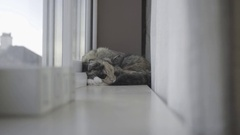 Cat On A  Window Ledge Stock Footage
