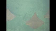 Vintage 16mm film, 1946, Florida rays and sharks overhead Stock Footage