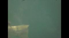 Vintage 16mm film, 1946, Florida aquarium tank, Marineland #3 Stock Footage