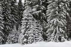 Winter trees in mountains covered with fresh snow Stock Photos