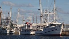 Shrimp boats docked in Key West. Stock Footage