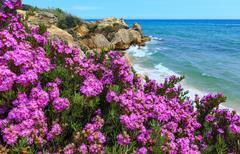 Atlantic blossoming coast view (Algarve, Portugal). Stock Photos