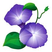 Morning glory flower in purple color Stock Illustration