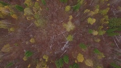 Aerial autumn forest cloudy misty weather Stock Footage