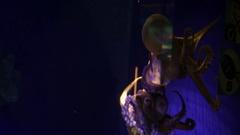 Fish In Aquarium Barcelona 10 Squid Stock Footage
