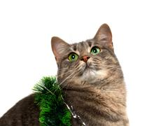Gray cat with green eyes in Christmas tinsel looking up Stock Photos