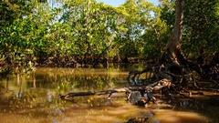 Time Lapse: Reflection of a mangrove ecosystem on the tidal flood at sunrise Stock Footage