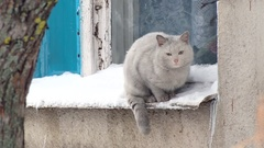 Gray cat sitting on the ledge outside. Winter day, snow, window Stock Footage