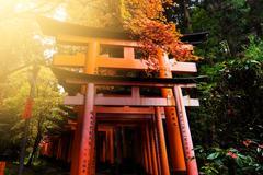 Autumn foliage in Fushimi Inari Shrine, Kyoto Stock Photos