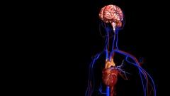 Circulatory System Stock Footage