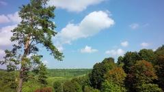 Forest under bluse sky timelapse Stock Footage