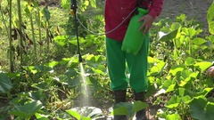 Spraying courgette vegetables in farm. Chemical plants treatment. Closeup. 4K Stock Footage