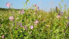 Pink flower swaying in Meadow Stock Footage