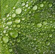 Raindrops on a green leaf Stock Photos