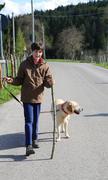 Cute little boy walks with his dog on a leash Stock Photos