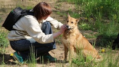 Woman examines a dog from pincers in the wood Stock Footage