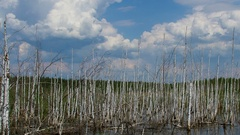 Time lapse of landscape with old birches in the lake Stock Footage