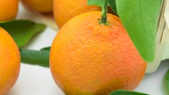 Tangerines with leaves in basket rotates in loop     Stock Footage