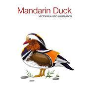 Mandarin duck on grass Stock Illustration