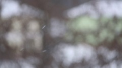 Snowflakes smoothly fall for bakground Stock Footage
