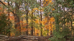 Autumn split rail fence tire swing woods wind Stock Footage
