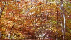 Leaves fall autumn woods Stock Footage