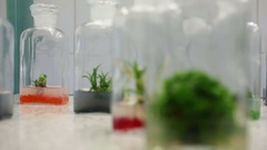 Research medical plants cultivation, bottles agar, growth chamber, science Stock Footage