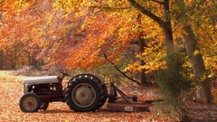 Close up 1950s ferguson tractor blowing autumn leaves Stock Footage