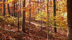 Autumn leaves fall on deer trail in woods Stock Footage