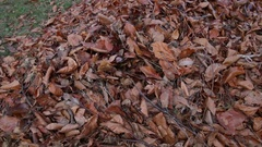 Lawnmower Mulching Leaves Closeup Stock Footage