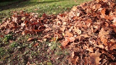 Leaves Being Raked in the Sun Stock Footage