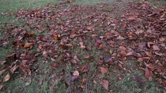 Lawnmower Mulching Leaves Overhead Shot Stock Footage