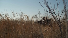 Airsoft soldier with a rifle and full NATO ammunition doing a low crawl Stock Footage