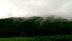 Mist rises from the trees to the sky Stock Footage