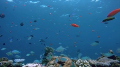 A colorful coral reef teeming with life Stock Footage