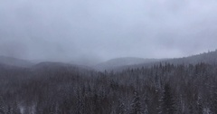 Misty winter forest in ural mountains / cloudy weather Stock Footage