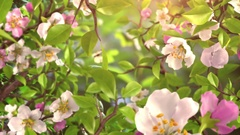 Intro with Butterflies and Blossoming Flowers Stock Footage