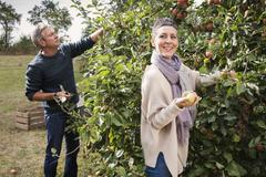 Happy couple picking apples from tree in orchard Stock Photos