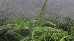 Tropical rain drops falling on the green palm tree leaves. Koh Phangan, Thailand Stock Footage
