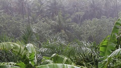 Tropical rain drops falling on the green palm tree leaves. Koh Phangan, Thailand Stock Footage