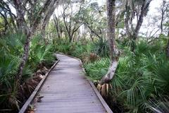 Boardwalk over the swamp Stock Photos