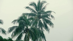 Tropical Rainfall on the background of palm trees Stock Footage